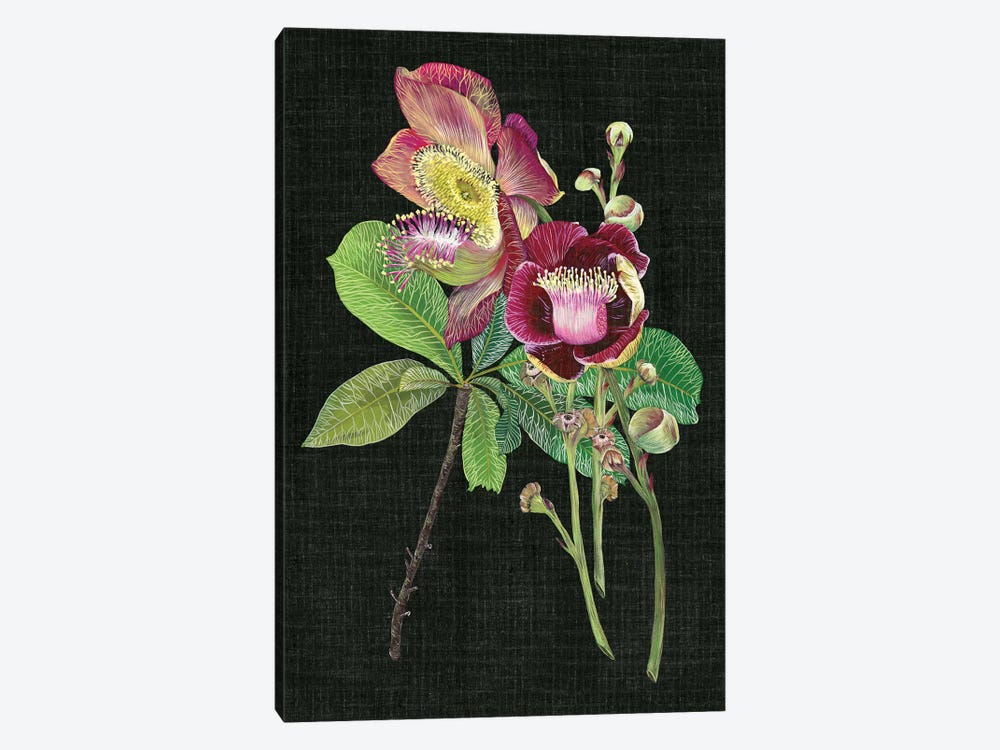 Couroupita Guianensis II by Melissa Wang 1-piece Art Print