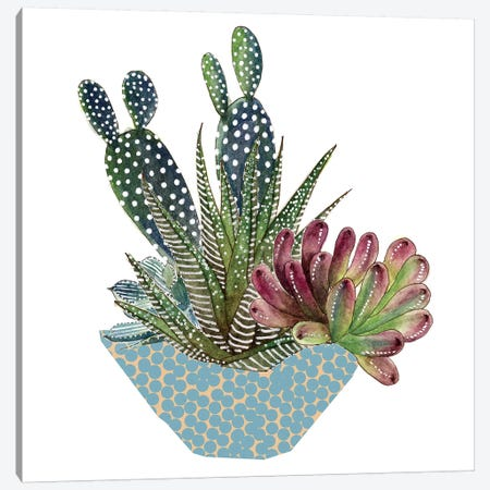 Cactus Arrangement I Canvas Print #WNG7} by Melissa Wang Canvas Print
