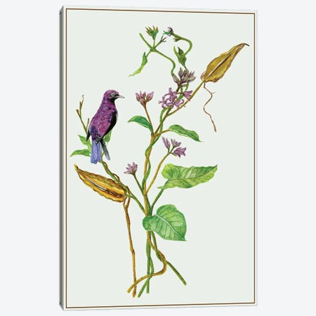 Metaplexis Japonica I Canvas Print #WNG85} by Melissa Wang Canvas Artwork
