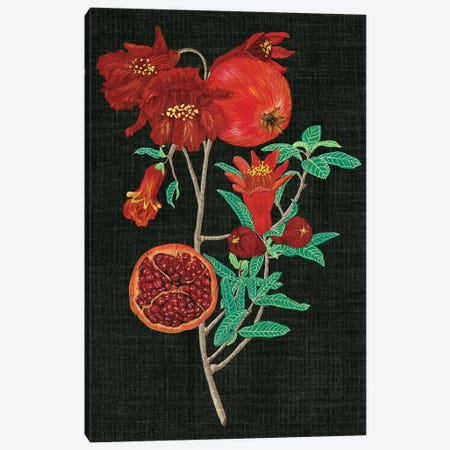 Pomegranate Study I Canvas Print #WNG88} by Melissa Wang Canvas Art Print