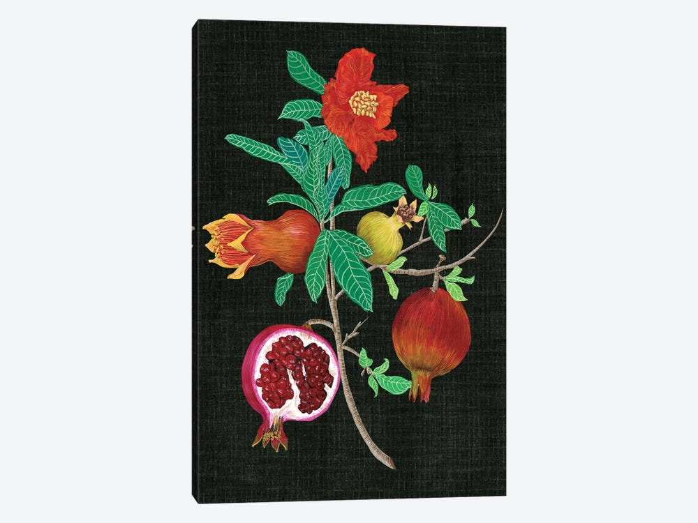 Pomegranate Study II by Melissa Wang 1-piece Canvas Print