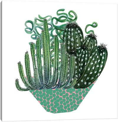 Cactus Arrangement II Canvas Art Print