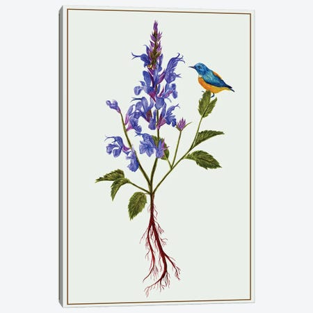 Salvia Miltiorrhiza I Canvas Print #WNG90} by Melissa Wang Canvas Artwork