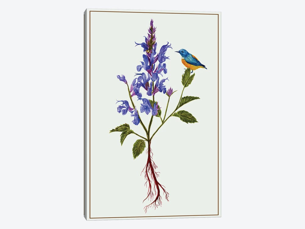 Salvia Miltiorrhiza I by Melissa Wang 1-piece Canvas Print