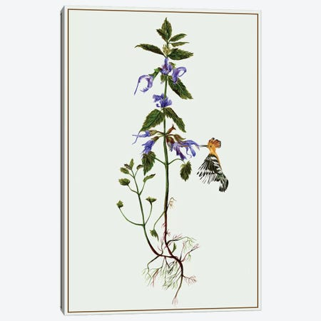 Salvia Miltiorrhiza II Canvas Print #WNG91} by Melissa Wang Canvas Wall Art