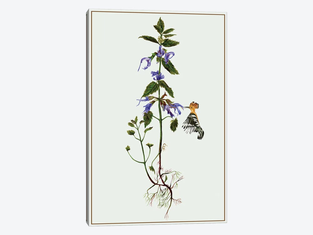 Salvia Miltiorrhiza II by Melissa Wang 1-piece Canvas Artwork