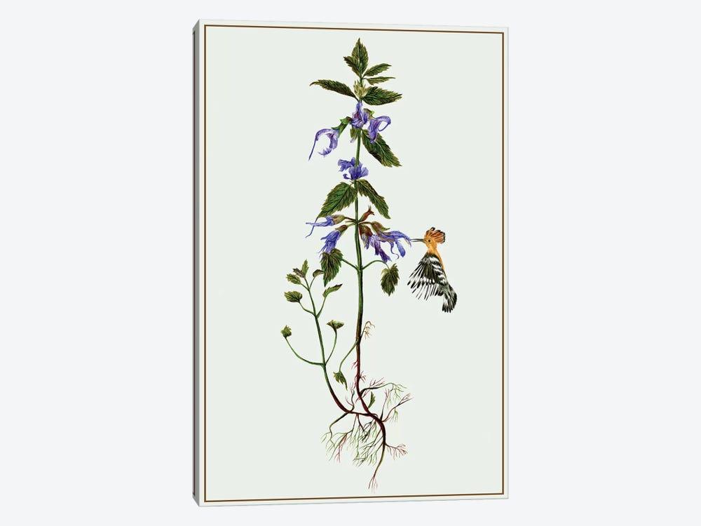 Salvia Miltiorrhiza II by Melissa Wang 1-piece Canvas Artwork