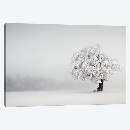 Silence Canvas Print #WON2} by Andreas Wonisch Canvas Art