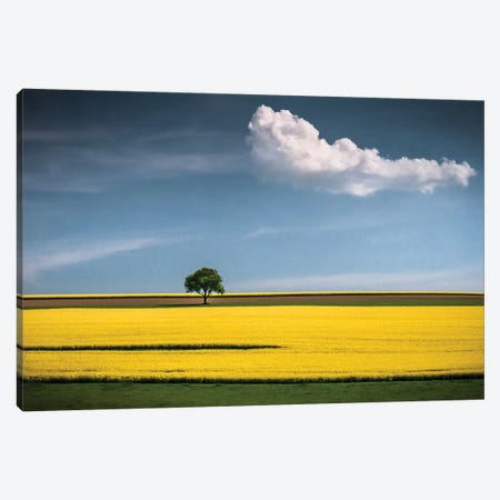 The Tree And The Cloud Canvas Print #WON3} by Andreas Wonisch Canvas Wall Art