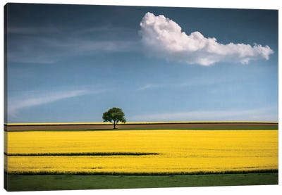 The Tree And The Cloud Canvas Art Print