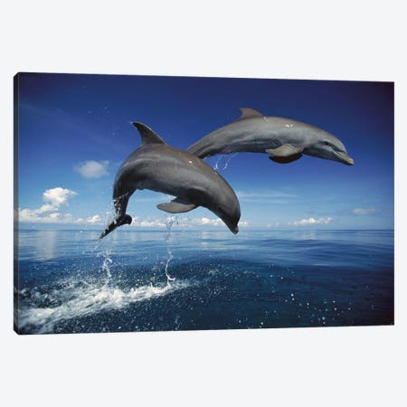 Bottlenose Dolphin Pair Jumping, Caribbean Canvas Print #WOT12} by Konrad Wothe Canvas Wall Art