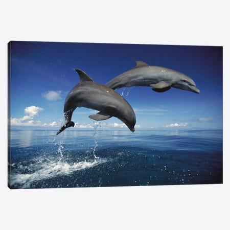 Bottlenose Dolphin Pair Jumping, Caribbean Canvas Print #WOT12} by Konrad Wothe Canvas Wall Art