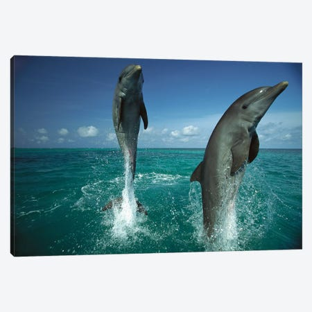 Bottlenose Dolphin Pair Leaping From Water, Caribbean Canvas Print #WOT13} by Konrad Wothe Canvas Art