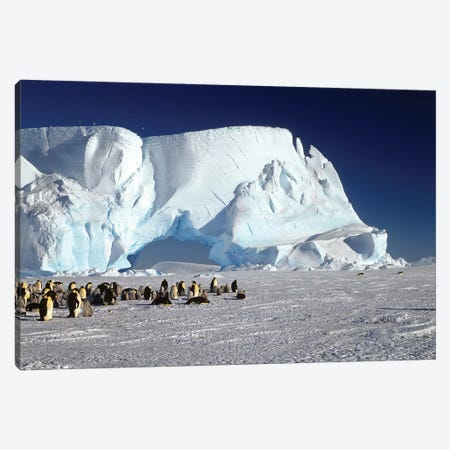 Emperor Penguin Colony And Iceberg, Weddell Sea, Antarctica Canvas Print #WOT24} by Konrad Wothe Canvas Art