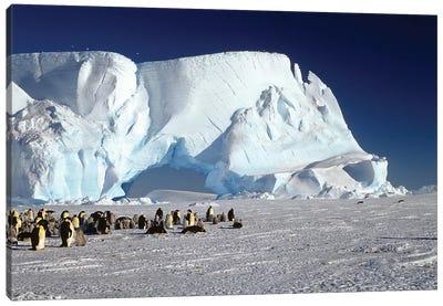 Emperor Penguin Colony And Iceberg, Weddell Sea, Antarctica Canvas Art Print