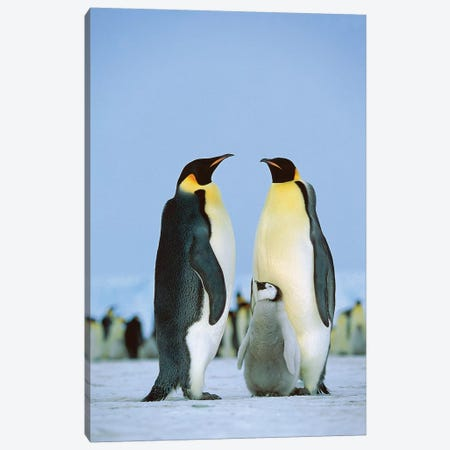 Emperor Penguin Family, Antarctica Canvas Print #WOT25} by Konrad Wothe Canvas Wall Art