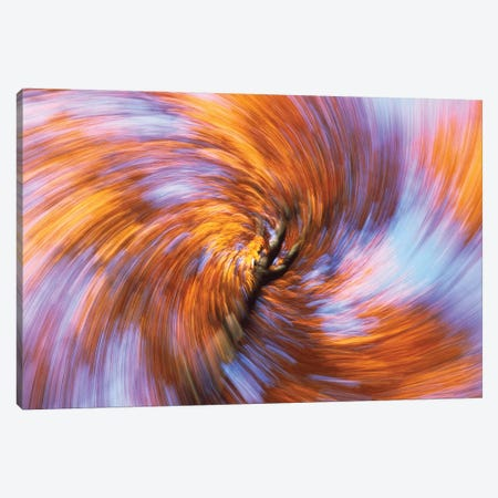 European Beech Abstract Of Autumn Colors, Germany 3-Piece Canvas #WOT26} by Konrad Wothe Canvas Artwork