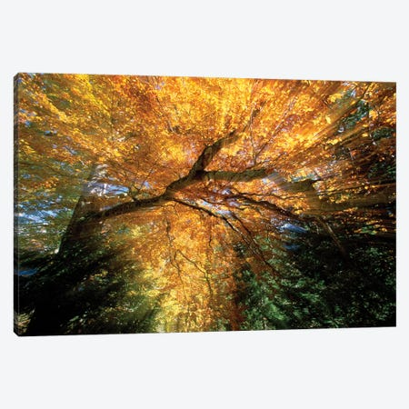 Golden-Colored Autumn Foliage, Abstract Canvas Print #WOT29} by Konrad Wothe Art Print