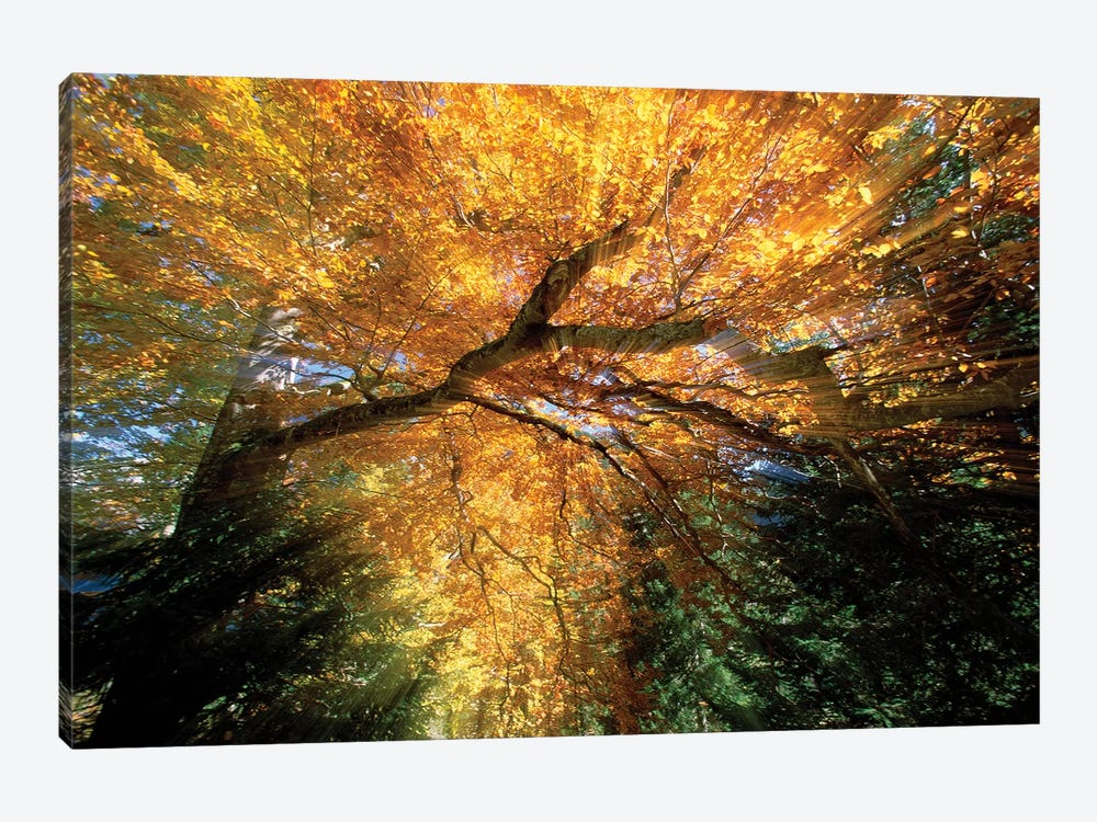 Golden-Colored Autumn Foliage, Abstract by Konrad Wothe 1-piece Canvas Artwork