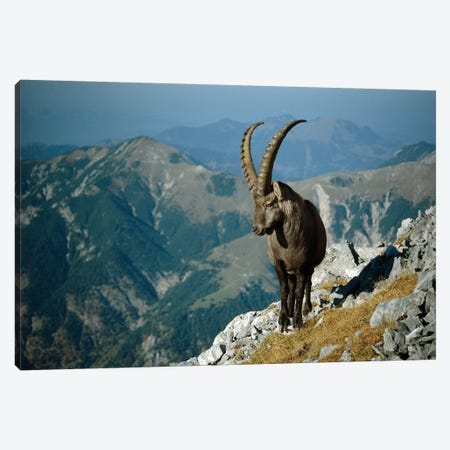 Alpine Ibex Male With Swiss Alps In Background, Europe Canvas Print #WOT2} by Konrad Wothe Art Print