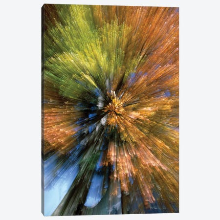 Autumn Foliage, Abstract Canvas Print #WOT4} by Konrad Wothe Canvas Wall Art