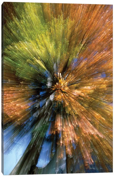 Autumn Foliage, Abstract Canvas Art Print