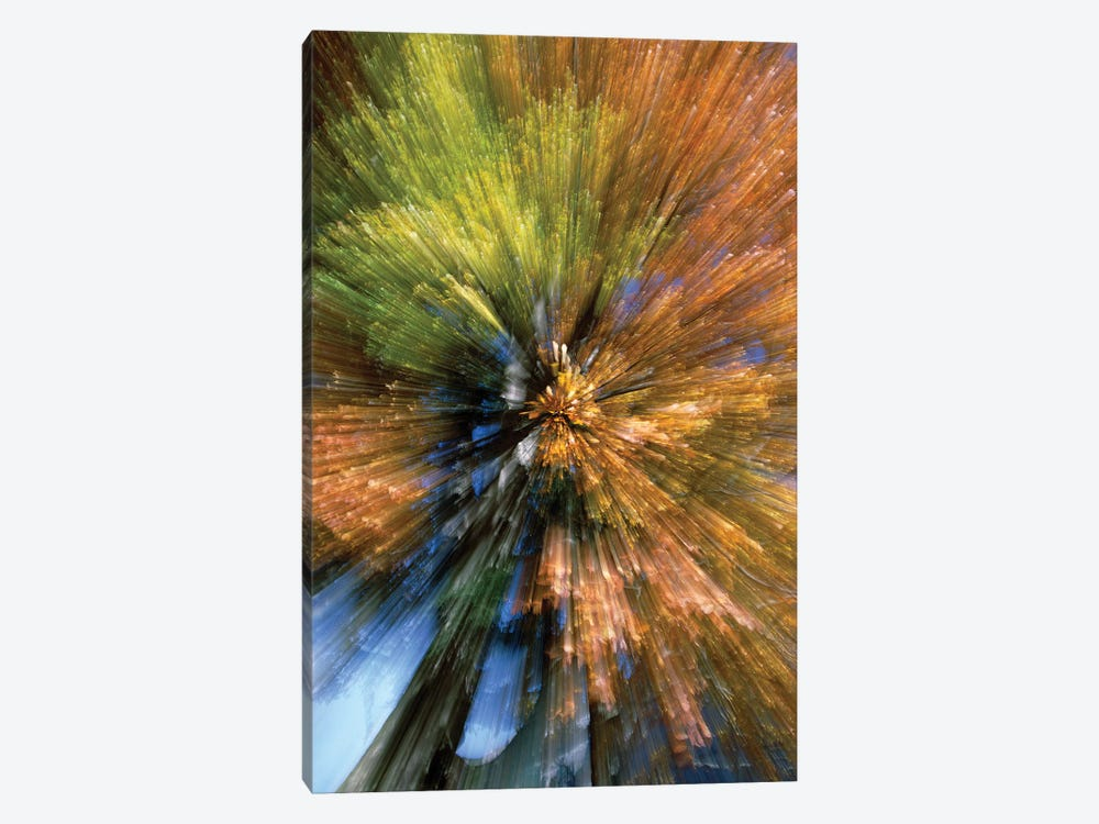 Autumn Foliage, Abstract by Konrad Wothe 1-piece Canvas Print