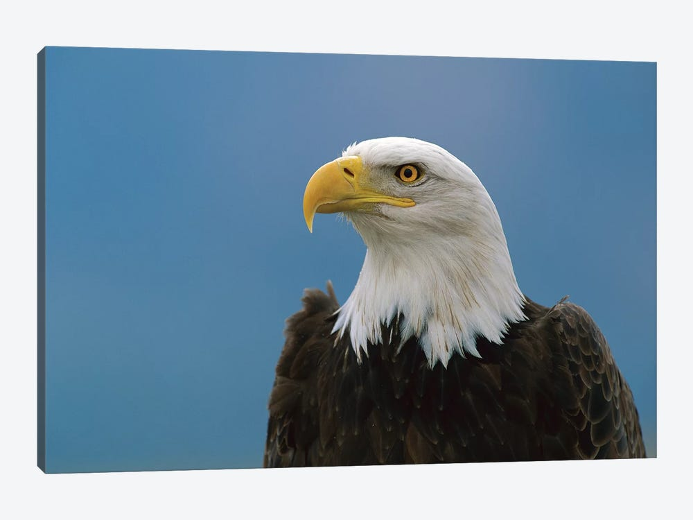 Bald Eagle Profile, North America by Konrad Wothe 1-piece Canvas Art