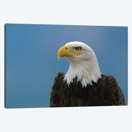 Bald Eagle Profile, North America Canvas Print #WOT5} by Konrad Wothe Canvas Art