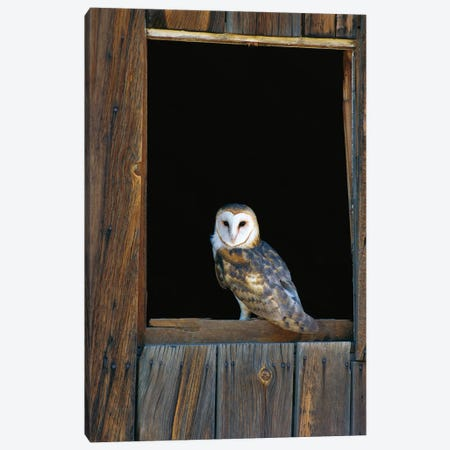Barn Owl Perching On Barn Window, North America Canvas Print #WOT6} by Konrad Wothe Canvas Wall Art