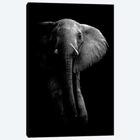 Elephant! Canvas Print #WPA1} by WildPhotoArt Canvas Artwork