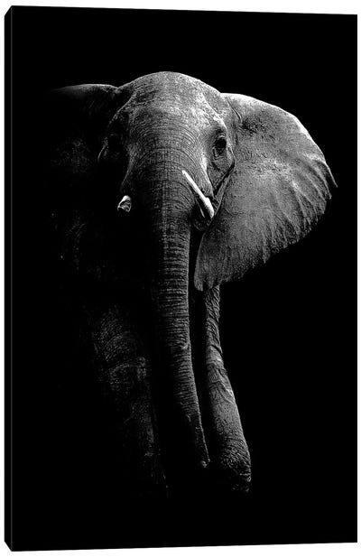 Elephant! Canvas Art Print