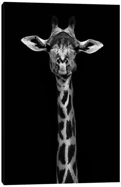 Giraffe Portrait Canvas Art Print
