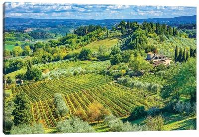 Tuscan Vineyard, San Gimignano, Tuscany, Italy. Canvas Art Print