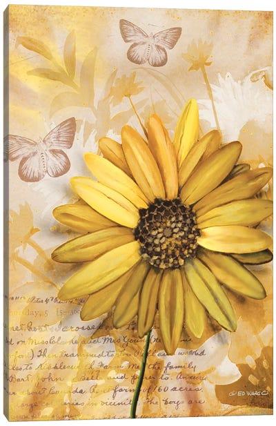 Flower & Butterflies II Canvas Art Print