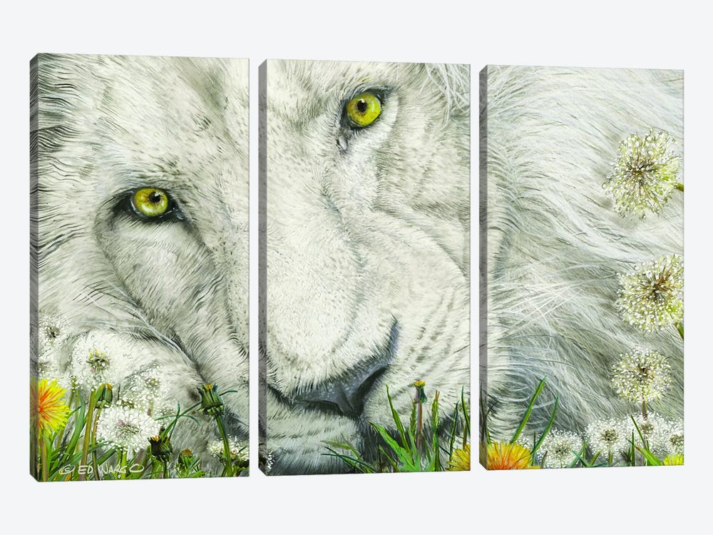 Dandy Lion by Ed Wargo 3-piece Canvas Art