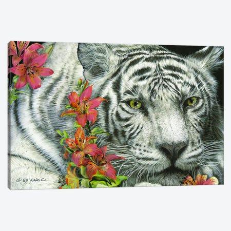 Tiger Lily 3-Piece Canvas #WRG6} by Ed Wargo Art Print