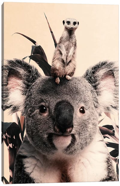 Koala Meerkat Dreamteam Canvas Art Print