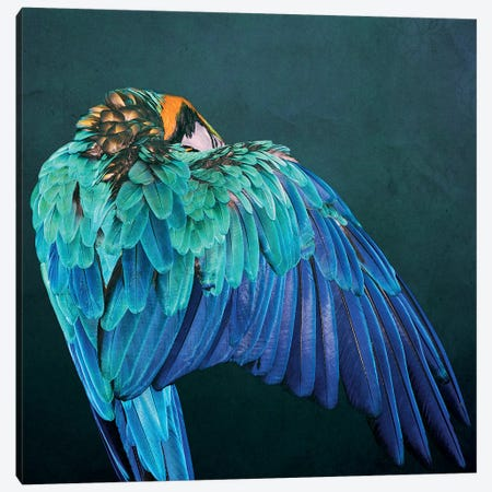 Parrot Wing Canvas Print #WRI104} by Wouter Rikken Canvas Artwork