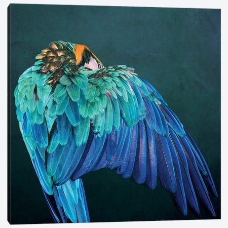 Parrot Wing Canvas Print #WRI104} by Wouter Rikken Canvas Artwork