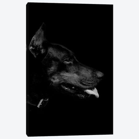 Dark Dobermann 3-Piece Canvas #WRI12} by Wouter Rikken Canvas Print