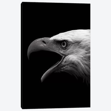 Dark Eagle 3-Piece Canvas #WRI13} by Wouter Rikken Canvas Print