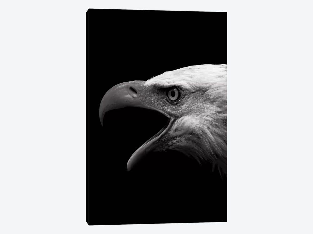 Dark Eagle by Wouter Rikken 1-piece Canvas Wall Art
