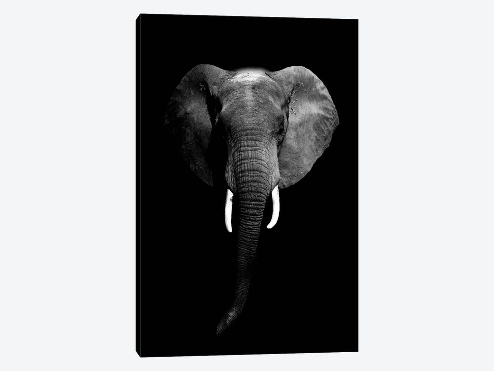 Dark Elephant I by Wouter Rikken 1-piece Canvas Art
