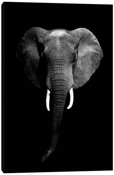 Dark Elephant I Canvas Art Print