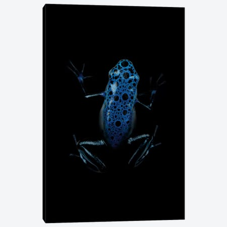 Dark Frog Canvas Print #WRI21} by Wouter Rikken Canvas Wall Art
