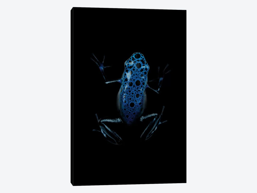 Dark Frog by Wouter Rikken 1-piece Canvas Art Print