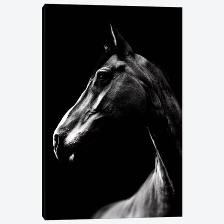 Dark Horse Canvas Print #WRI25} by Wouter Rikken Art Print
