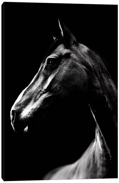 Dark Horse Canvas Art Print