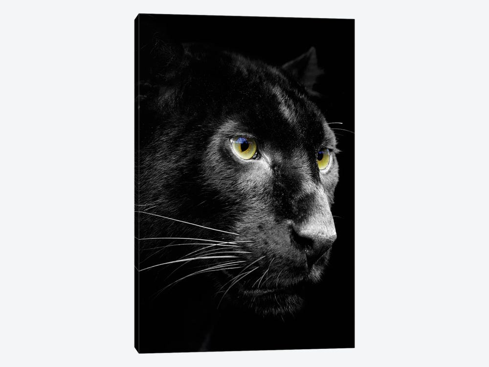 Dark Jaguar by Wouter Rikken 1-piece Canvas Art